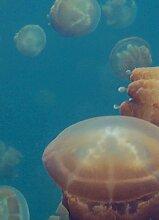 Wizard + Genius 5123-2V-1 Fototapete Jellyfishes