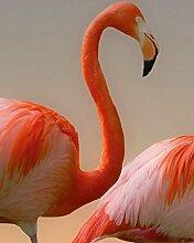 Wizard + Genius 5141-2V-1 Fototapete Flamingos
