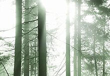 Wizard + Genius 5181-4V-1 Fototapete Sun Rays