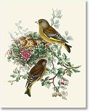 WJWGP Vogel Botanisches Plakat Orientalische Wand