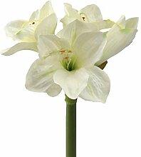 wohnfuehlidee Kunstblume Amaryllis, 5er Set, Farbe