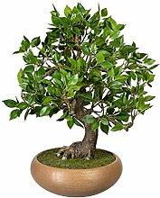 wohnfuehlidee Kunstpflanze Bonsai Ficus, mit
