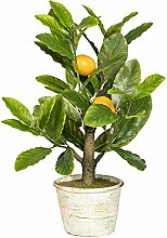wohnfuehlidee Kunstpflanze Bonsai Zitrone,