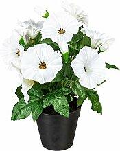wohnfuehlidee Kunstpflanze Petunie, 2er Set, Farbe