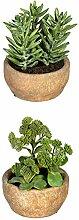 wohnfuehlidee Kunstpflanzen Sedum-Aloe-Mix, 2-Fach