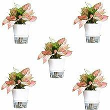 WUHUAROU 5 Stück Blumentopf Pflanztöpfe Lazy