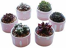 WUHUAROU 6 Stück Blumentöpfe Keramik Sukkulenten