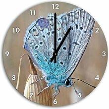wunderschöner blauer Schmetterling, Wanduhr Durchmesser 30cm mit schwarzen spitzen Zeigern und Ziffernblatt, Dekoartikel, Designuhr, Aluverbund sehr schön für Wohnzimmer, Kinderzimmer, Arbeitszimmer