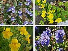 Wunderschönes Randpflanzensortiment 4 Töpfe