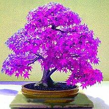 WuWxiuzhzhuo Beautiful Purple 20Stück Ahorn