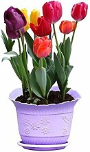 XdiseD9Xsmao 150 Stück Tulip Seeds Parfüm Blume