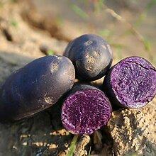 XQxiqi689sy 100 Stück/Beutel Gemüsesamen