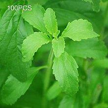 XQxiqi689sy 100 Stück/Beutel Sweet Leaf Seeds