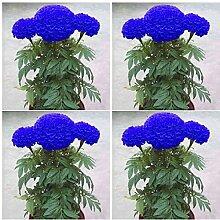 XQxiqi689sy 200 Stück Blaue Ringelblumensamen