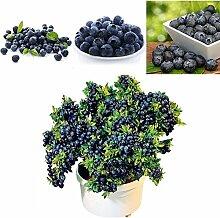 XQxiqi689sy 50 Stück Blaubeersamen Obst