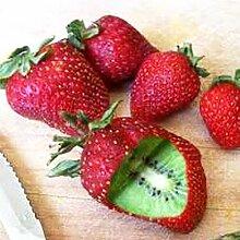 XQxiqi689sy 500 Stück Seltene Erdbeer-Kiwisamen
