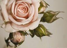XXL Poster Fototapete Tapete Rose Blume Pflanze