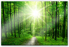 XXL Wandbilder - XXL Wandbild Sunny Forest