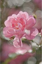 XXXLutz FOTOTAPETE, Grau, Papier, Blume, 184x254 cm
