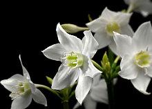 XXXLutz FOTOTAPETE, Grau, Papier, Blume, 254x184 cm