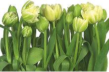 XXXLutz FOTOTAPETE, Grau, Papier, Blume, 368x254 cm
