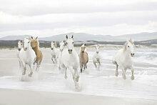 XXXLutz FOTOTAPETE, Grau, Papier, Pferd, 368x254 cm