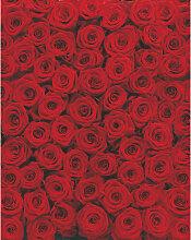 XXXLutz FOTOTAPETE, Grau, Papier, Rose, 194x270 cm