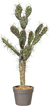 XXXLutz KUNSTPFLANZE Kaktus , Dunkelgrün,