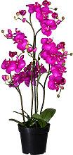 XXXLutz KUNSTPFLANZE Orchidee , Lila, Kunststoff,