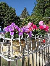 XYZ Eisen-Geländer Blumen-Topf-Regale, Hängepflanzen-Regal, Wand-Blumenständer für Balkon Empfindlich haltbar ( farbe : Weiß , größe : L-60cm )