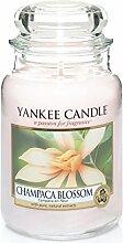 Yankee Candle Duftkerze, Glas, Beige, 9.9x9.8x17.2