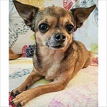 YANZUAN DIY 5D Diamantmalerei Welpen-Chihuahua
