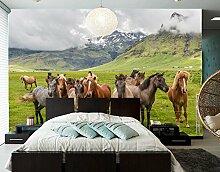 Yosot Die Pferde Auf Der Wiese Tier Tapete