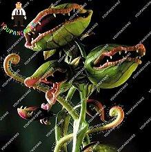 YOUPANGPANG Seltene Fleischfressende Pflanze
