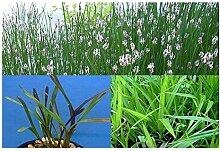 ZAC Wagner 50 Filterpflanzen im Sortiment