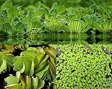 ZAC Wagner Schwimmpflanzen Sortiment 3 Sorten neu