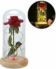 Zantec Luminous geschützt und Blumen-Dome mit