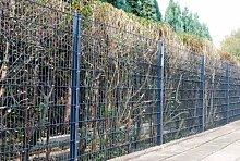 Zaun 100m Komplett-Angebot 1830mm Höhe RAL7016/anthrazit Doppelstabmattenzaun, Gartenzaun, Metallzaun, Zäune, Tor, Gartentor,