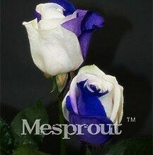 Zeit-Limit 100 Teilchen mit einer großen Sammlung aller Arten von seltenen Rosen-Samen Mehrjährige Blumen 14 Rosensorten ME # 007 2