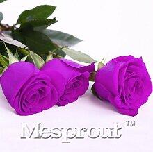 Zeit-Limit 100 Teilchen mit einer großen Sammlung aller Arten von seltenen Rosen-Samen Mehrjährige Blumen 14 Rosensorten ME # 007 7