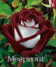 Zeit-Limit 100 Teilchen mit einer großen Sammlung aller Arten von seltenen Rosen-Samen Mehrjährige Blumen 14 Rosensorten ME # 007 12