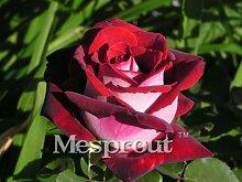 Zeit-Limit 100 Teilchen mit einer großen Sammlung aller Arten von seltenen Rosen-Samen Mehrjährige Blumen 14 Rosensorten ME # 007 10