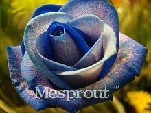 Zeit-Limit 100 Teilchen mit einer großen Sammlung aller Arten von seltenen Rosen-Samen Mehrjährige Blumen 14 Rosensorten ME # 007 6