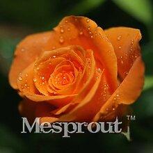 Zeit-Limit 100 Teilchen mit einer großen Sammlung aller Arten von seltenen Rosen-Samen Mehrjährige Blumen 14 Rosensorten ME # 007