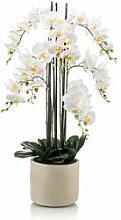 Zeitlose Orchidee in Topf