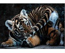 ZHAOHH Diamant Stickerei DIY Diamant malerei Tiger