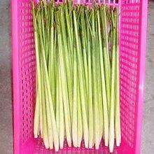 Zitronengras Samen Cymbopogon Samen Kräuter Gemüse Bonsai Pflanze DIY Hausgarten - 10pcs / lo
