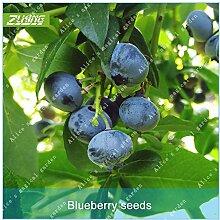ZLKING 100 Stück Rare Bio Chinese Heidelbeeren Obst Bonsai frische Samen süße Natur Exotische Obstbaum Pflanze Dekoriert Garten