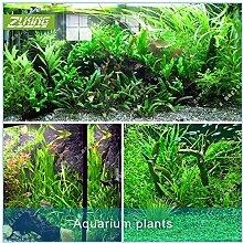 ZLKING 1000pcs Aquarium Gras Samen Mischwasser Gras Live-Pflanze Aquarium Dekoration Landschaft Ornament Wasserpflanze