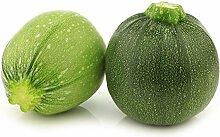Zucchini Di Nizza Saatgut - Gartenkürbis